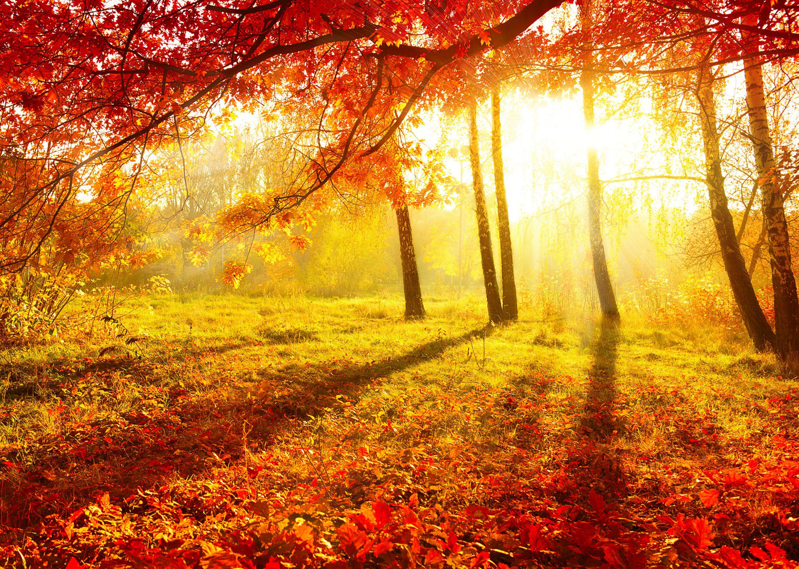 Start van de herfst