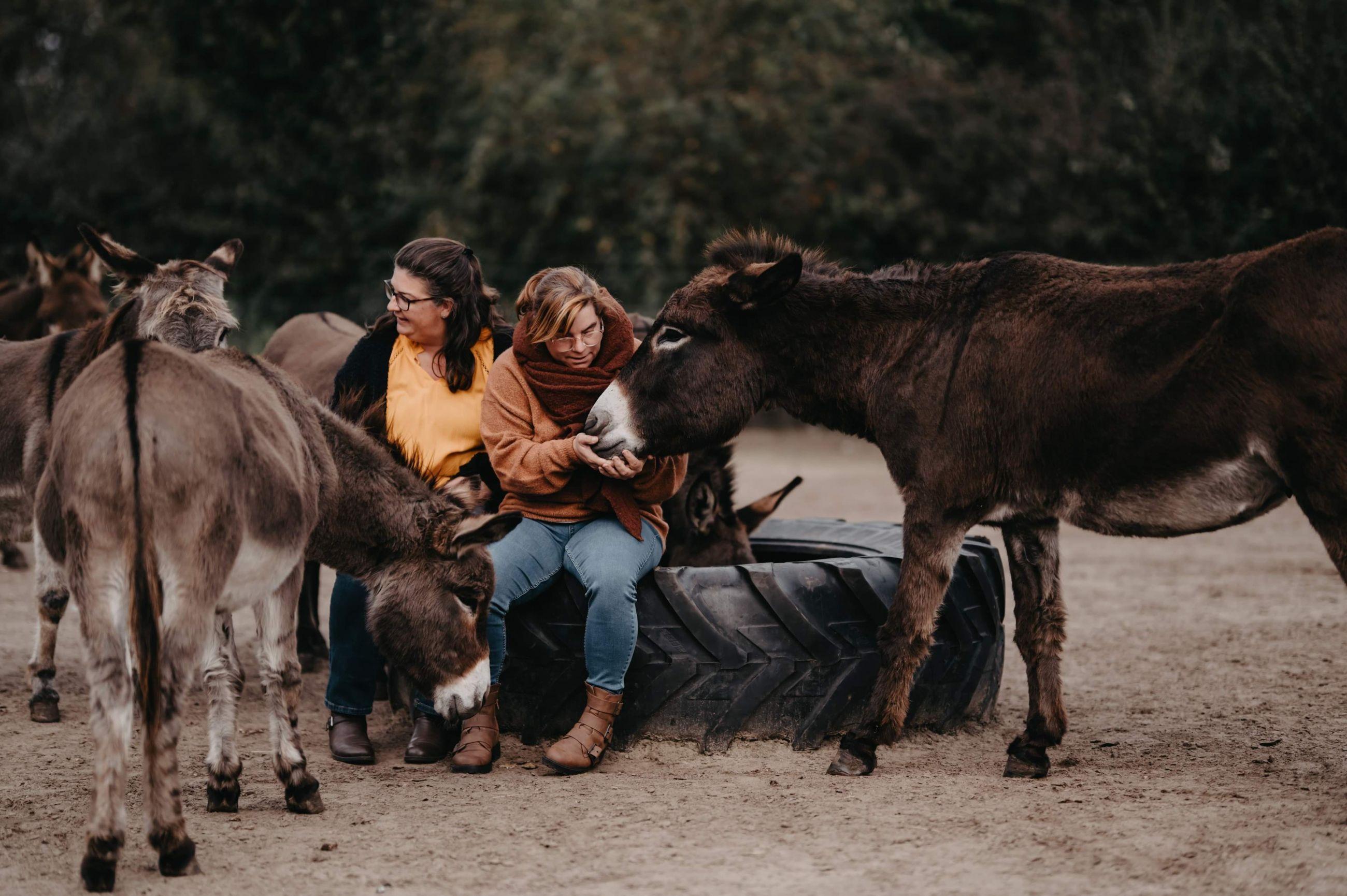 Een thuis voor ezels