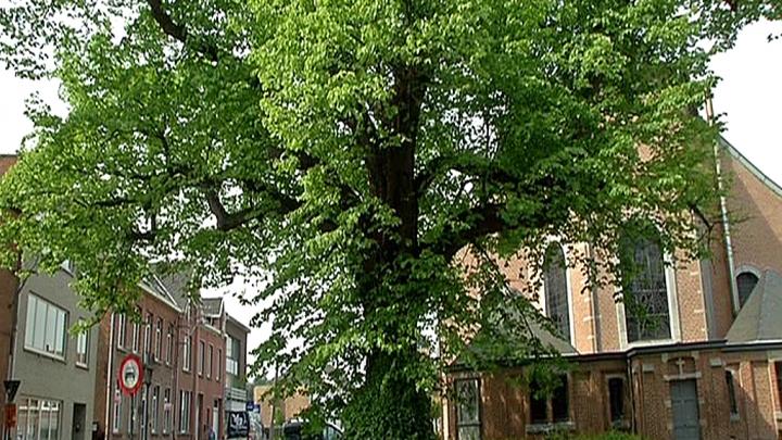 Bomen als monumenten