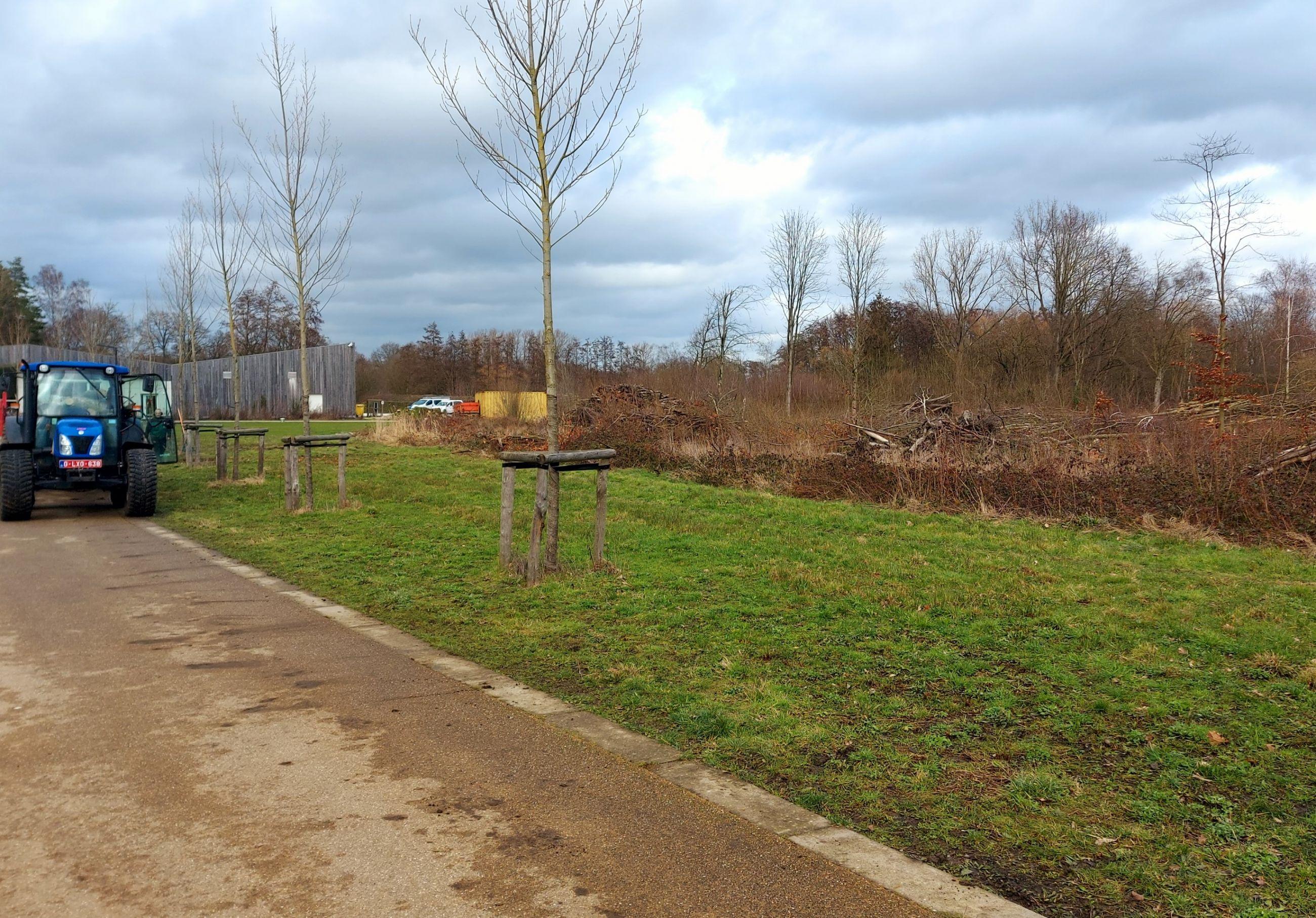 Nog meer bomen gekapt in de Averegten