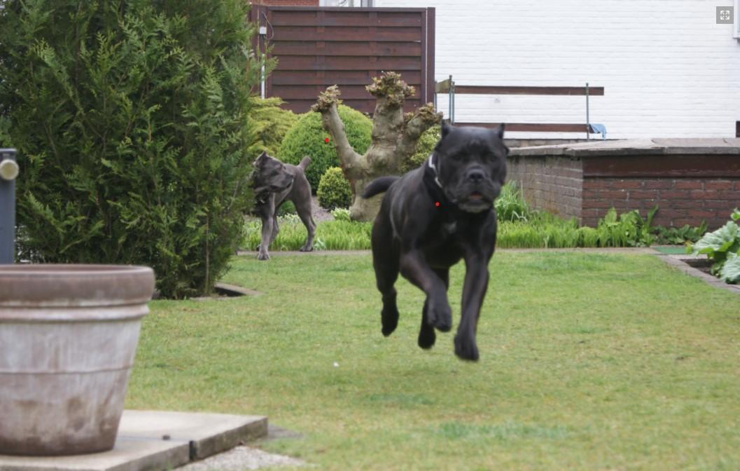 68 verwaarloosde honden opgehaald in Booischot
